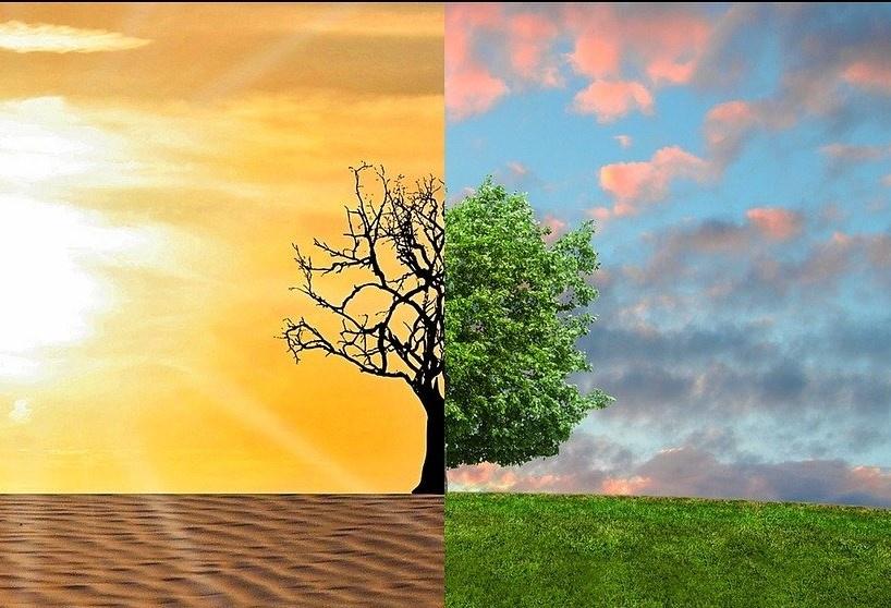 敏捷就像一棵树,依靠有利的条件来繁衍生息。